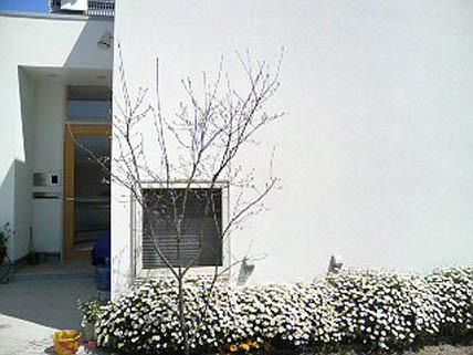 20070405105839.jpg