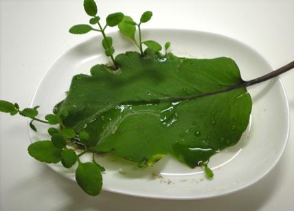 green00.JPG